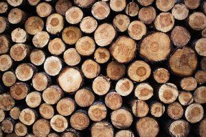 Myllyn Mies Oy - Ostetaan puuta - Puukauppa
